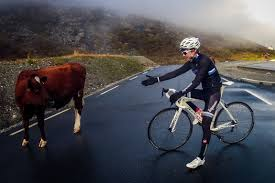 share the damn road cycling jersey bicycling pinterest road roadtripping norway cyclingtips