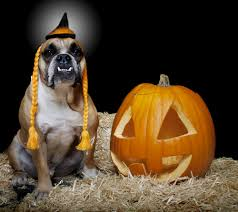 halloween goody bags bone chilling halloween safety tips for dogs u2013 iheartdogs com