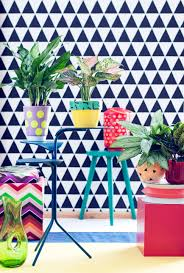 october 2016 chinese evergreen is houseplant of the month