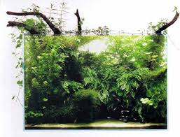 Aquascape Aquarium Plants Aquarium Plants Archives Second Nature Aquariums