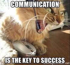 Success Cat Meme - success cat best cat wallpaper 2018