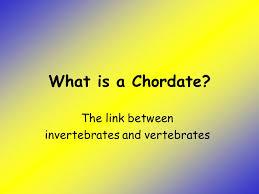 the link between invertebrates and vertebrates ppt video online