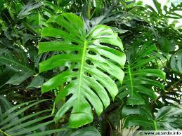 plante d駱olluante chambre les plantes dépolluantes d intérieur