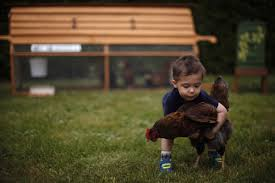 rent lexus in toronto backyard farmers egg static over chicken rental companies