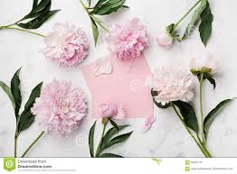 Peony Flowers Pink Peony Flowers Envelope And Paper Card On White Stone Table