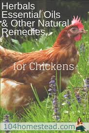 herbals essential oils u0026 natural remedies for chickens