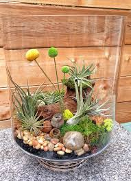 1119 best terrariums beauty in a glass images on pinterest