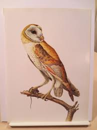 owl item vintage barn owl 1960s frameable picture wall art print of bird