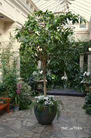 indoor planting indoor outdoor planting ideas time with thea