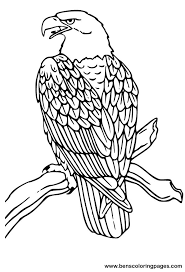 lovely eagle color 28 additional coloring pages kids