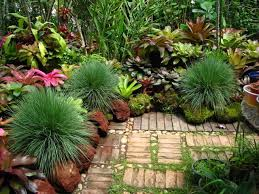 60 best bromeliads images on pinterest plants gardening and
