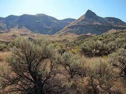 Oregon vegetaion images Blue mountains ecoregion wikipedia jpg