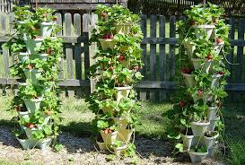 best planters 5 best planters for vegetables and fruits
