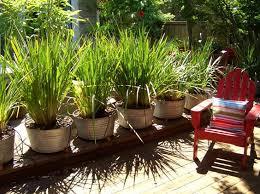 Small Backyard Privacy Ideas Triyae Com U003d Backyard Privacy Ideas With Plants Various Design