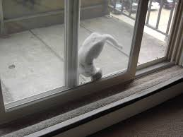 pet doors for sliding glass patio doors cat patio door choice image glass door interior doors u0026 patio doors