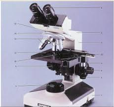 compound light microscope parts and functions the components of a compound light microscope locations and their