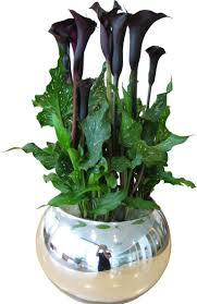 Indoor Garden Design 30 Best Indoor Garden Design In Bloom Colour U0026 Flower Displays