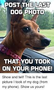 Dog Phone Meme - post the last dog photo that you took on your phone show and tell