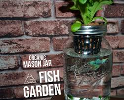 3 mason jar aquaponics kit build your own hydroponics herb