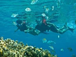 Oklahoma Snorkeling images Shore excursion awesome shore snorkel beach cozumel mexico jpg