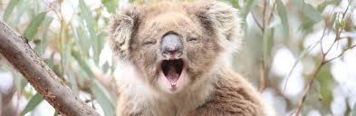 native plants in the tropical rainforest australian animals tourism australia