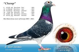 cuisine des pigeons voyageurs b15 1145657 dieter balmann