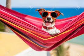American Flag Hammock Dog Relaxing On A Fancy Red Hammock With Sunglasses Lizenzfreie