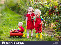 children picking apples in fruit garden boy and baby play