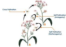 types of pollination cross pollination or allogamy biology