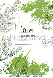 herb stock images royalty free images u0026 vectors shutterstock