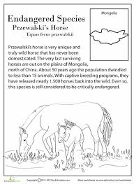 endangered animals worksheets worksheets