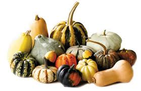 ornamental pumpkins gourds and squash arrived at central