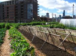 triyae com u003d backyard urban garden farms various design