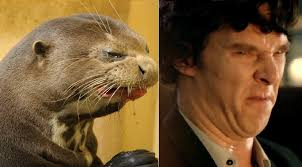 Cumberbatch Otter Meme - las pantuflas cumbermeme