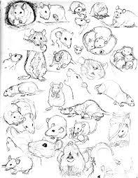 rat sketch practice 9 by never mor deviantart com on deviantart