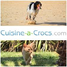 cuisine à crocs cuisine a crocs com accueil