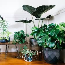 Modern Houseplants by Designing With Potted Plants Sunset