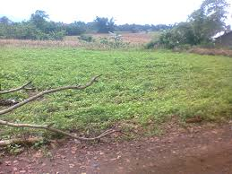 500 Sqm Residential Lots For Sale U2013 Bukidnon Development For Community