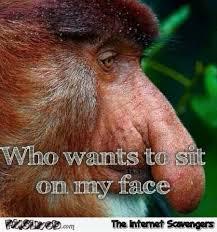 Funny Monkey Meme - funny adult proboscis monkey meme pmslweb
