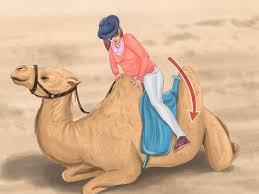 how to ride a camel 12 steps with pictures wikihow