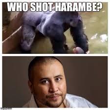 Zimmerman Memes - harambe zimmerman imgflip
