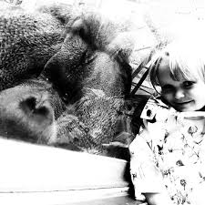 colchester zoo colchesterzoo twitter