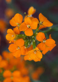 best early spring flowers for the pacific northwest early spring