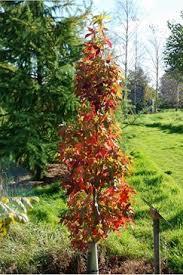 trees for small gardens uk cori matt garden