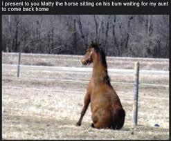 Meme Horse - 80 super funny horse memes