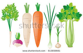 Green Root Vegetable - root vegetable stock images royalty free images u0026 vectors