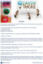 101 best natural solutions images on pinterest pest control