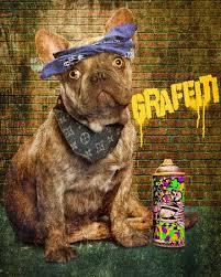 french bulldog puppies sale