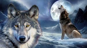 wolf howling at the moon wallpapers 1920x1080 189 41 kb