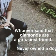 sprüche hund treue kennt ihr gute hunde zitate hund sprüche zitat